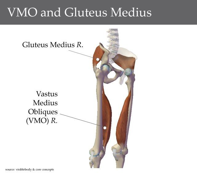 VMO and Glutues Medius