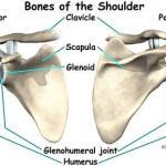 Frozen shoulder: are your exercises targeting on the frozen part?